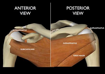 Rotator Cuff And Labrum Surgery