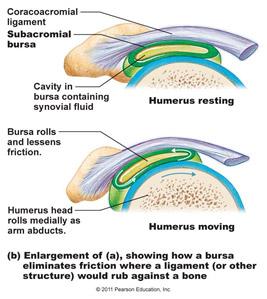Shoulder Impingement Rotator Cuff Tendinitis Dr Charl